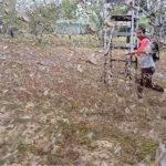sedang-memburu-belalang