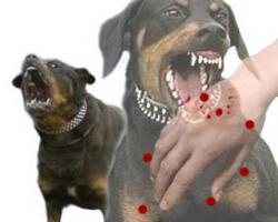 Kasus Gigitan Hewan Rabies Tertinggi di Delta Pawan