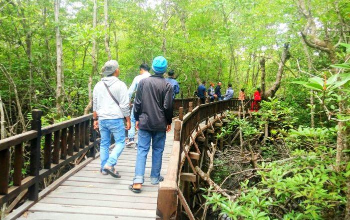 Idul Adha, Pengunjung Berwisata di Hutan Mangrove Sukadana