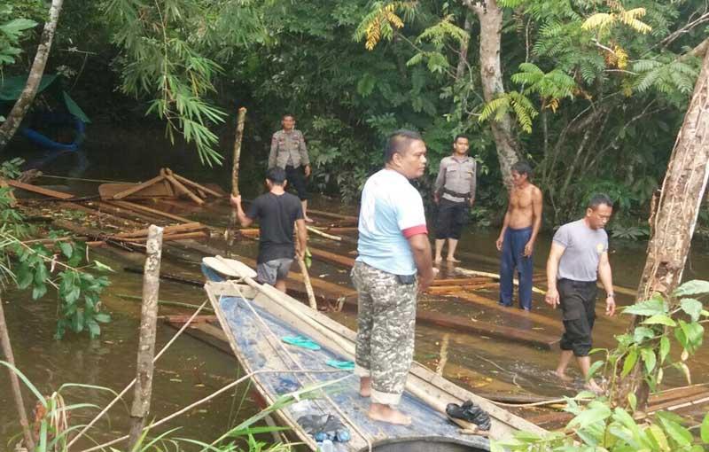 Illegal Loging