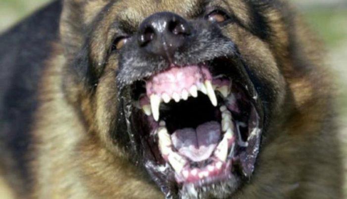 Dinkes Belum Cabut Status KLB Rabies