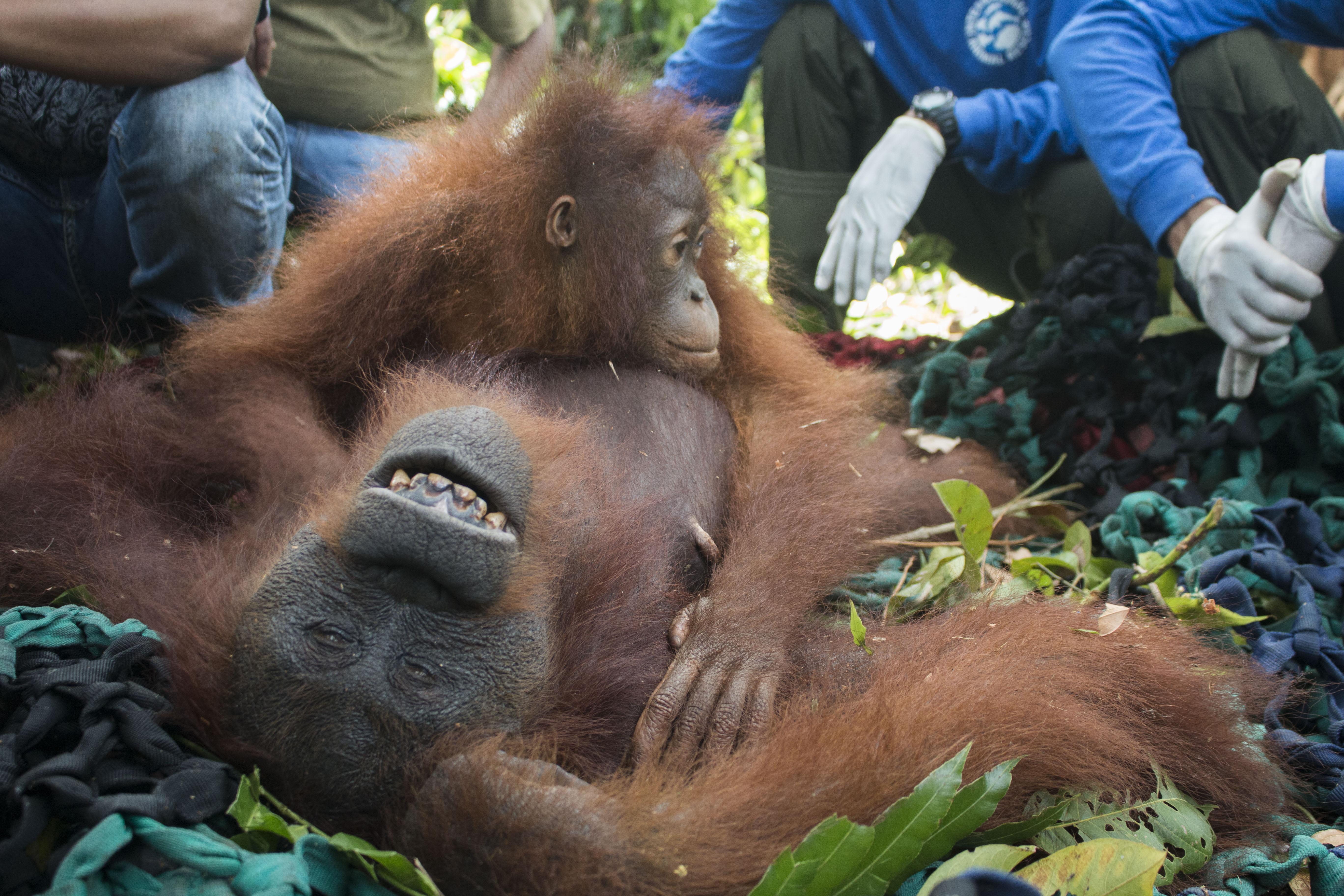 Rescue Mama Ris & Baby_Tempurukan_04122018_RUD_306