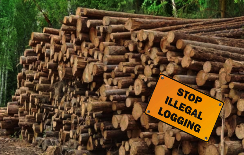 Stop-Illegal-Logging-Net